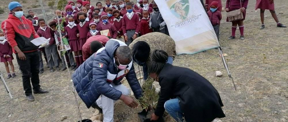 Fruit trees planted in schools to provide opportunity for environmental education, value of trees  as well as shade for school children and teachers.